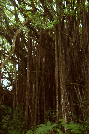Travel Diary: Big Island Part II